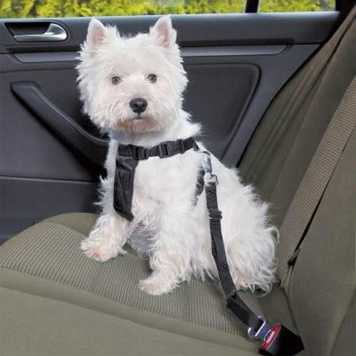 ISO Bezpečnostní Pás pro psa do Auta 25mm x 44- 70cm5